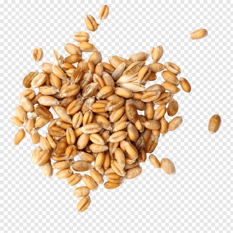Pile of peanuts, Cereal germ Wheat Grain, Wheat grain free.