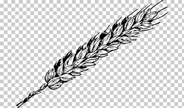 Wheat Grain Free content , Wheat s PNG clipart.