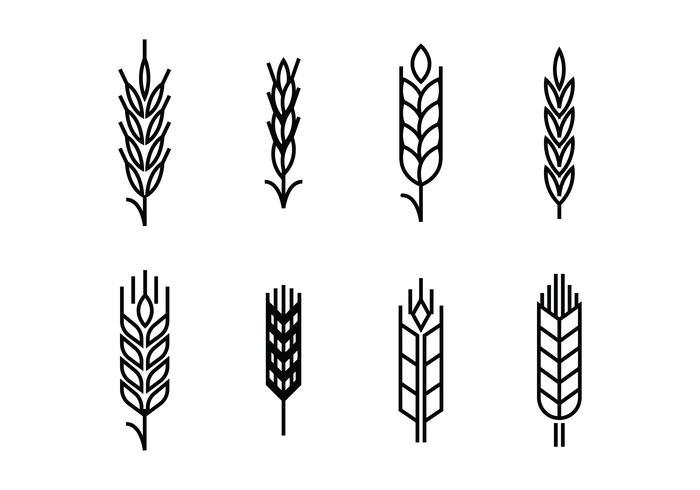 Wheat ears set icons.