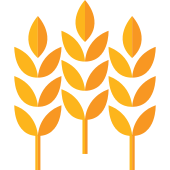 Wheat PNG Icon (12).