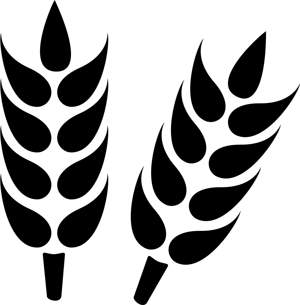 Wheat Grain Close Up Svg Png Icon Free Download (#58981.