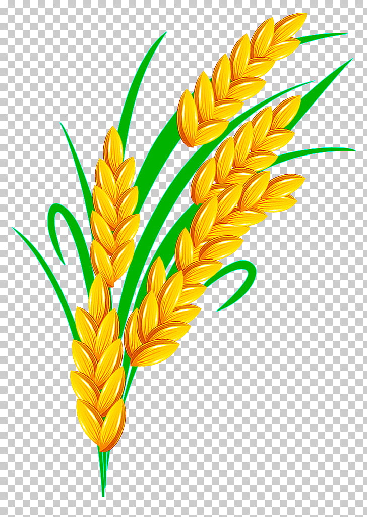 Rice Euclidean , Golden Rice, wheat illustration PNG clipart.