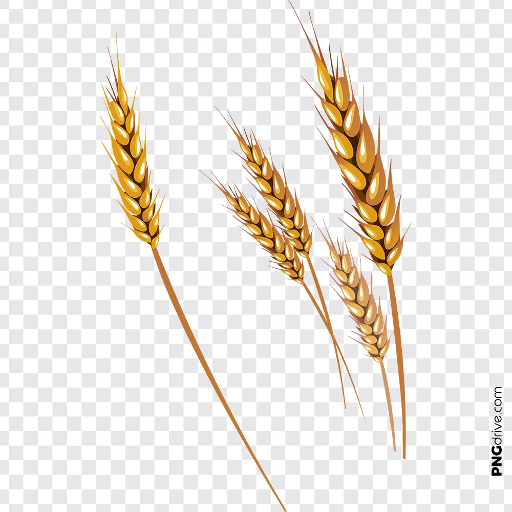 Grains Clipart Gold Wheat Vector PNG Image.