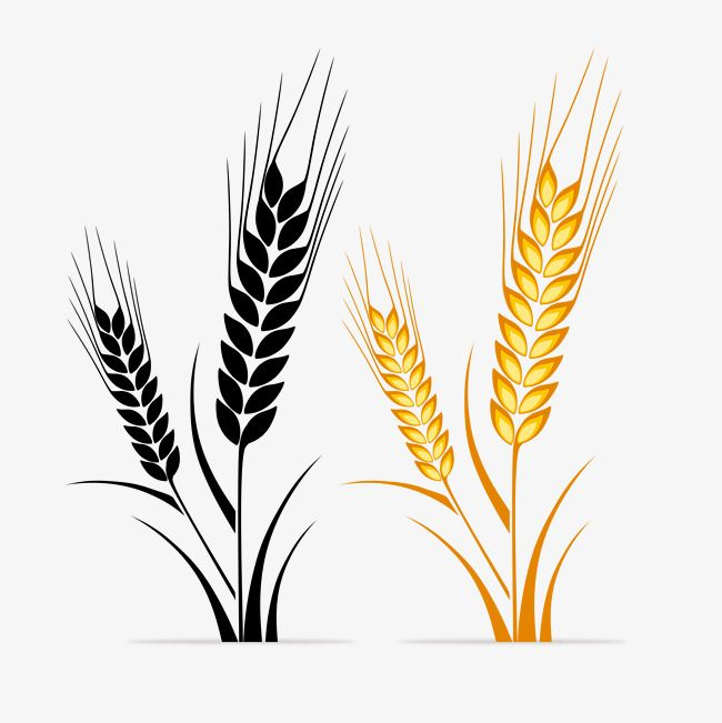 Wheat Logo, Colored, Colorless, Wheat PNG Transparent Clipart Image.