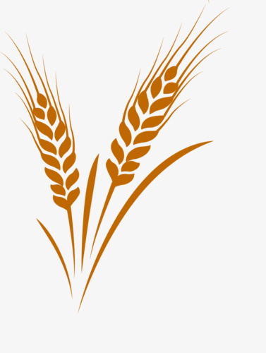 Free To Pull Wheat, Wheat Clipart, Golden, Wheat PNG Transparent.