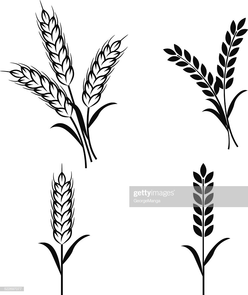 60 Top Wheat Stock Illustrations, Clip art, Cartoons, & Icons.