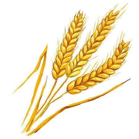 80,573 Wheat Stock Illustrations, Cliparts And Royalty Free Wheat.