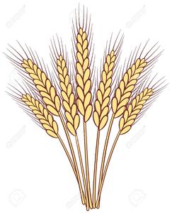 Stalks Of Wheat Clipart.