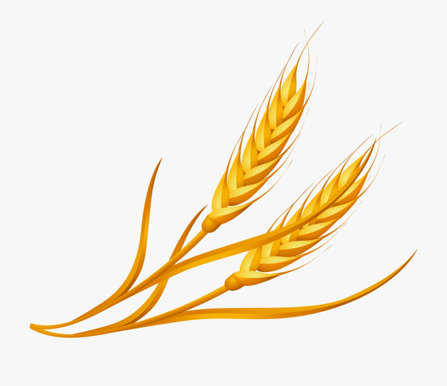 Wheat Clipart Png, Cliparts & Cartoons.