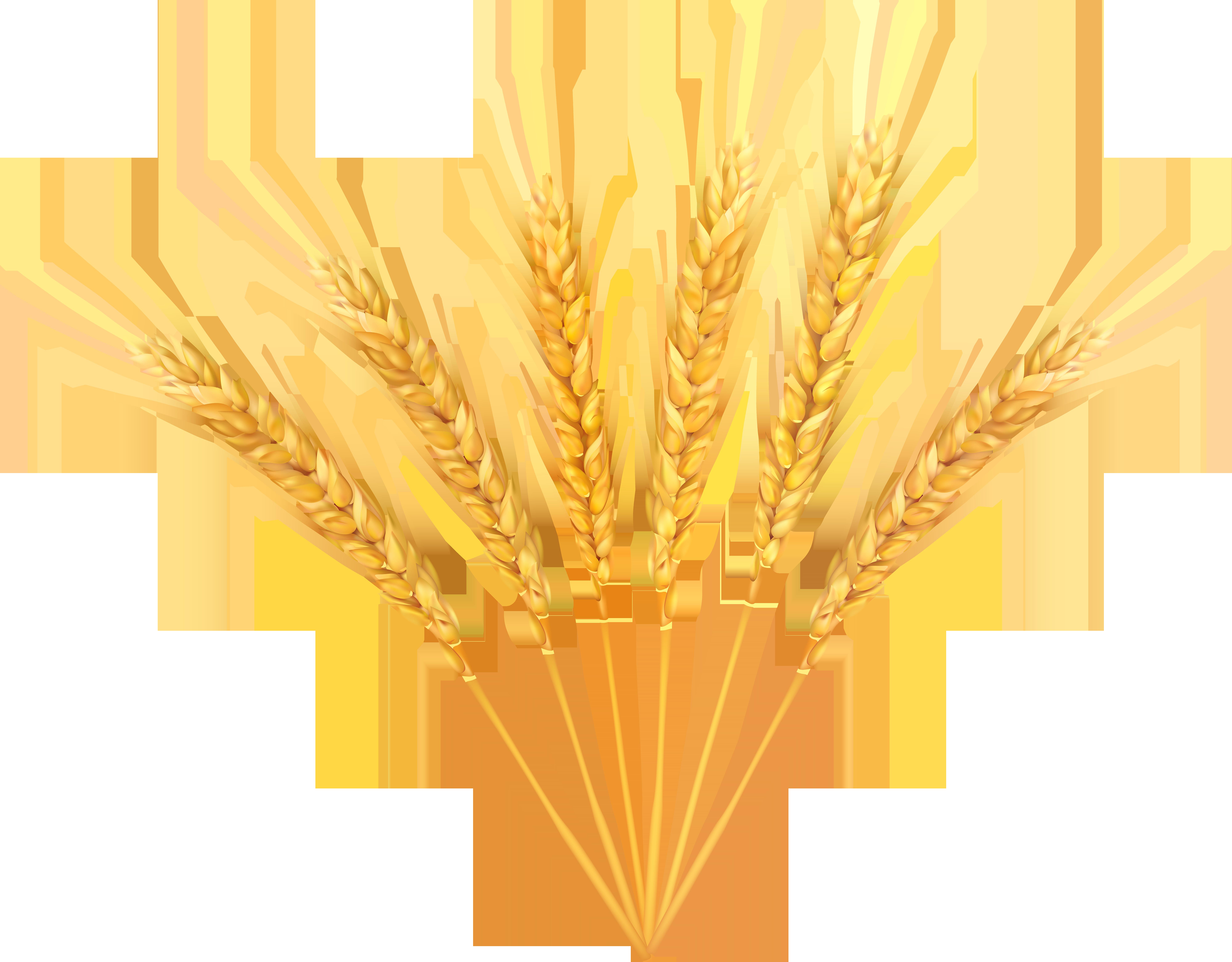Wheat Decoration PNG Clip Art Image.