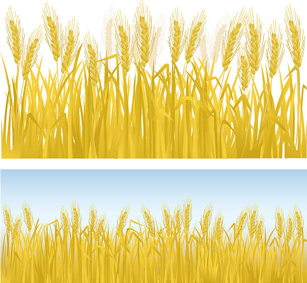 Wheat field clipart 3 » Clipart Station.