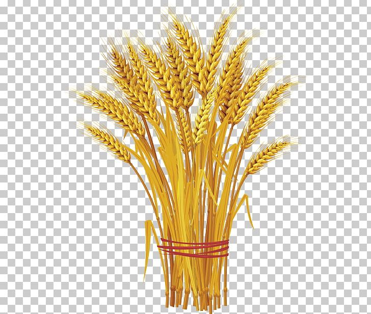 Graphics Wheat Ear Cereal PNG, Clipart, Cereal, Cereal Germ.