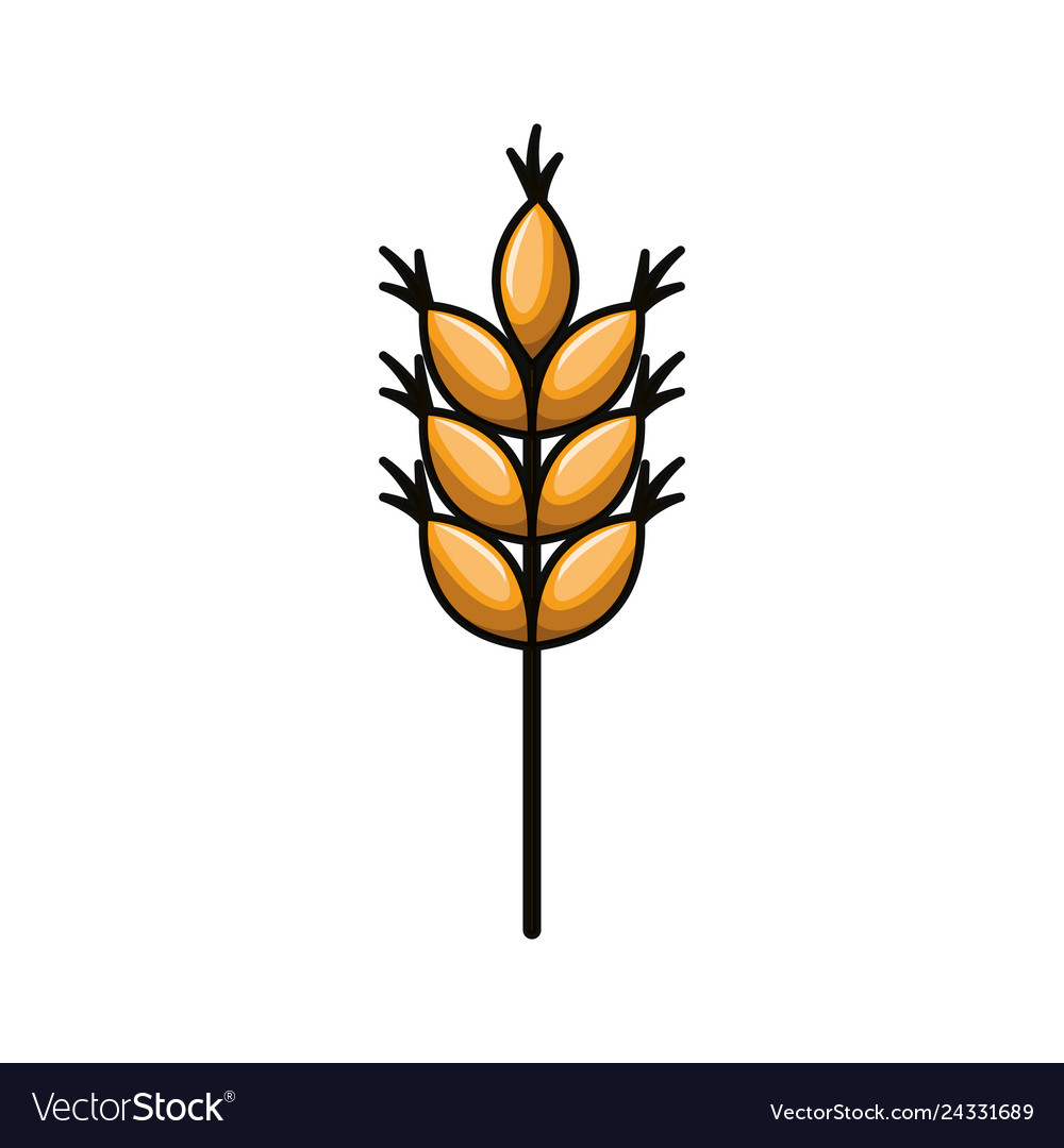 Wheat leaves isolated icon.