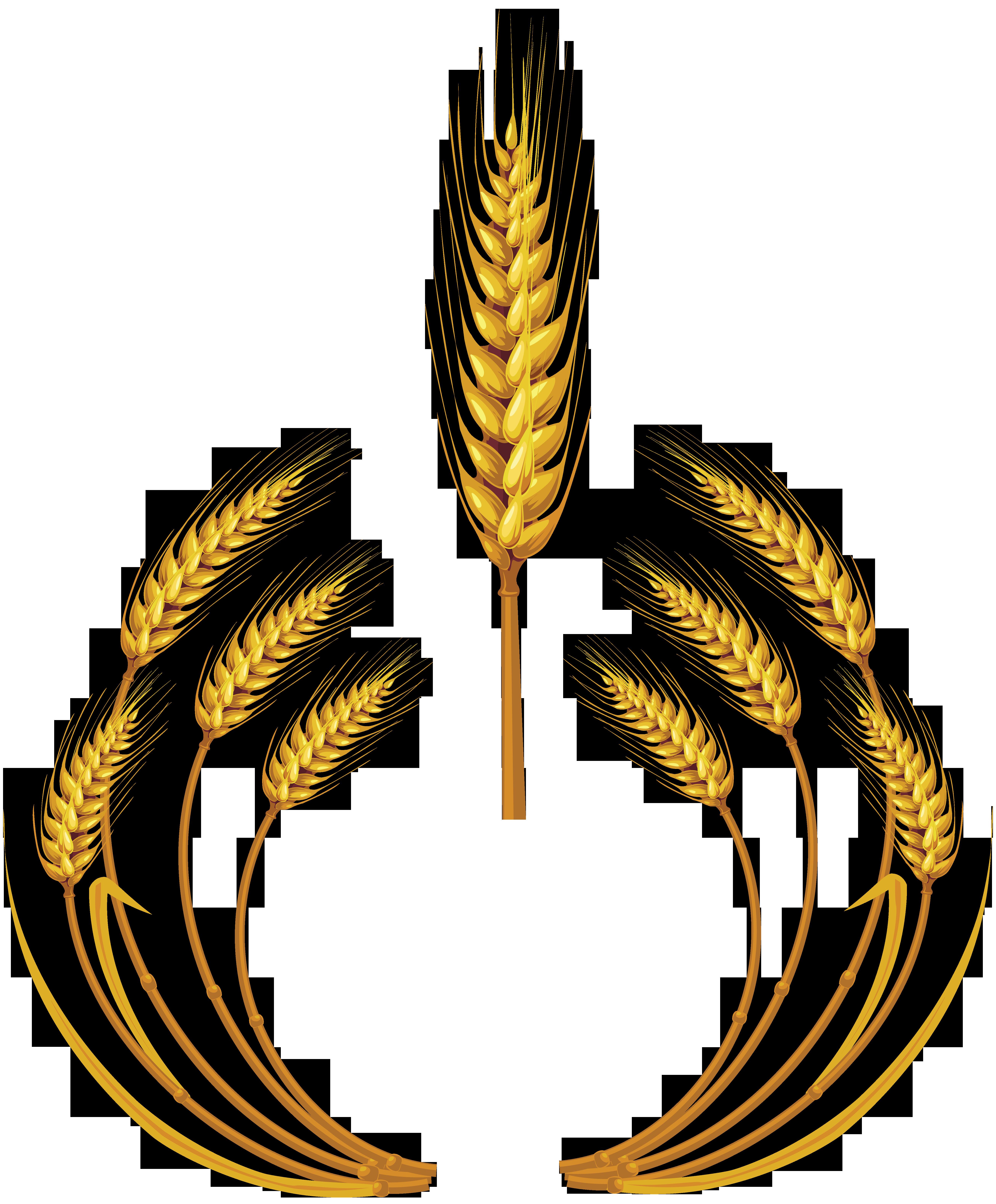 Grain clipart wheat logo, Grain wheat logo Transparent FREE.