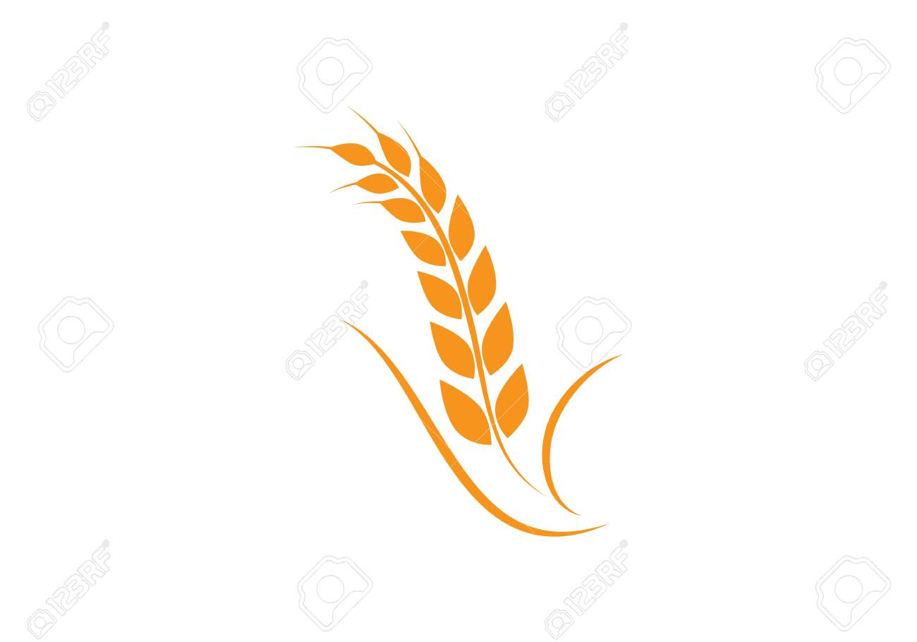 Agriculture wheat logo concept design template.