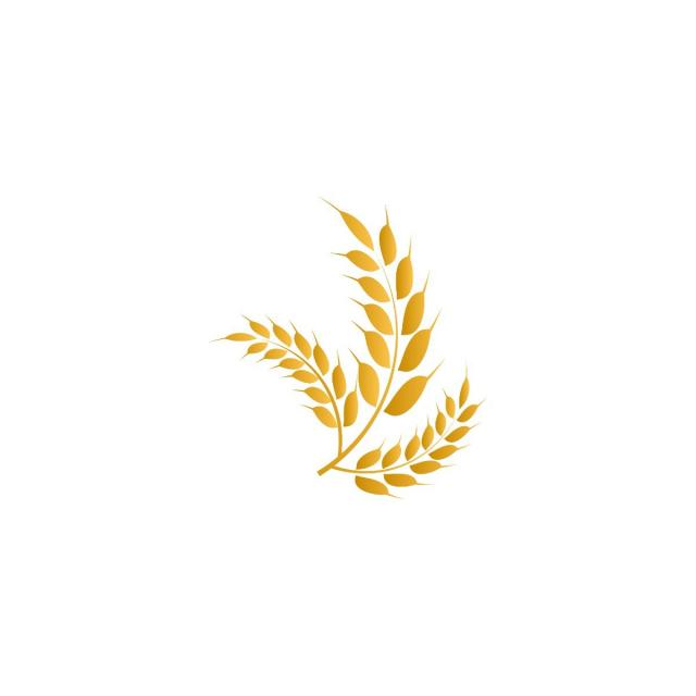 Wheat Yellow Logo Icon Template Vector, Symbol, Icon, Wheat PNG and.