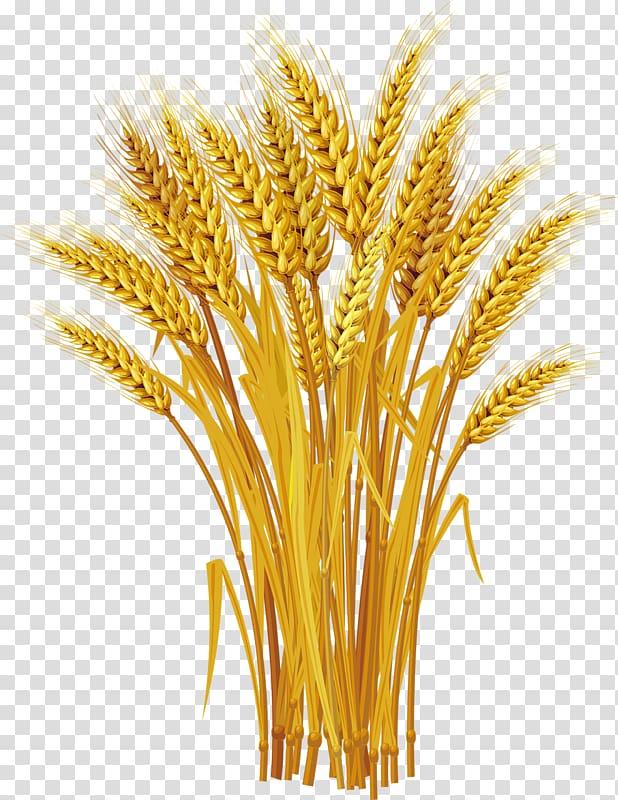 Wheat grass illustration, Wheat Ear , Yellow wheat harvest.