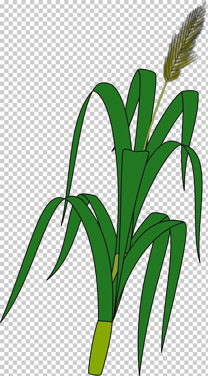 Wheat Plant Ear Grain , Maize PNG clipart.
