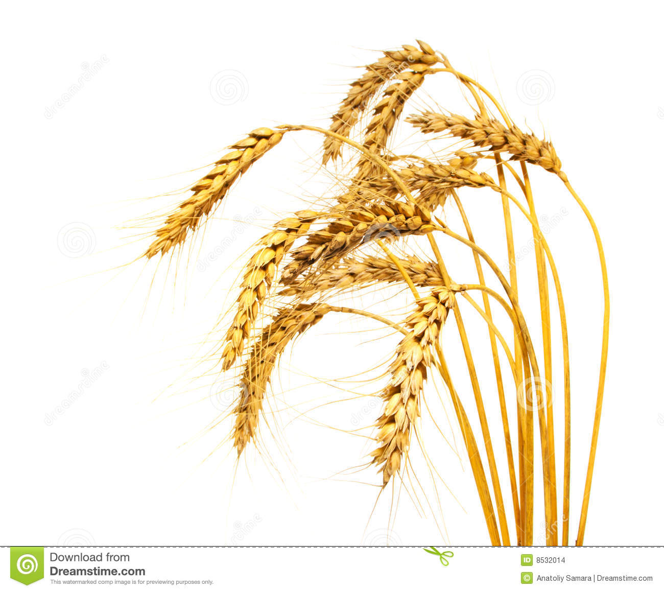 Wheat plant clipart 4 » Clipart Station.