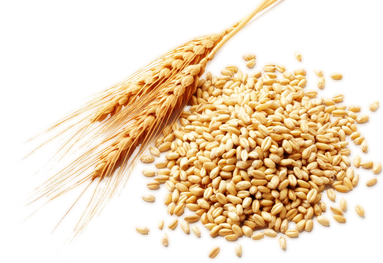 Download Free png Wheat PNG, Download PNG image with transparent.