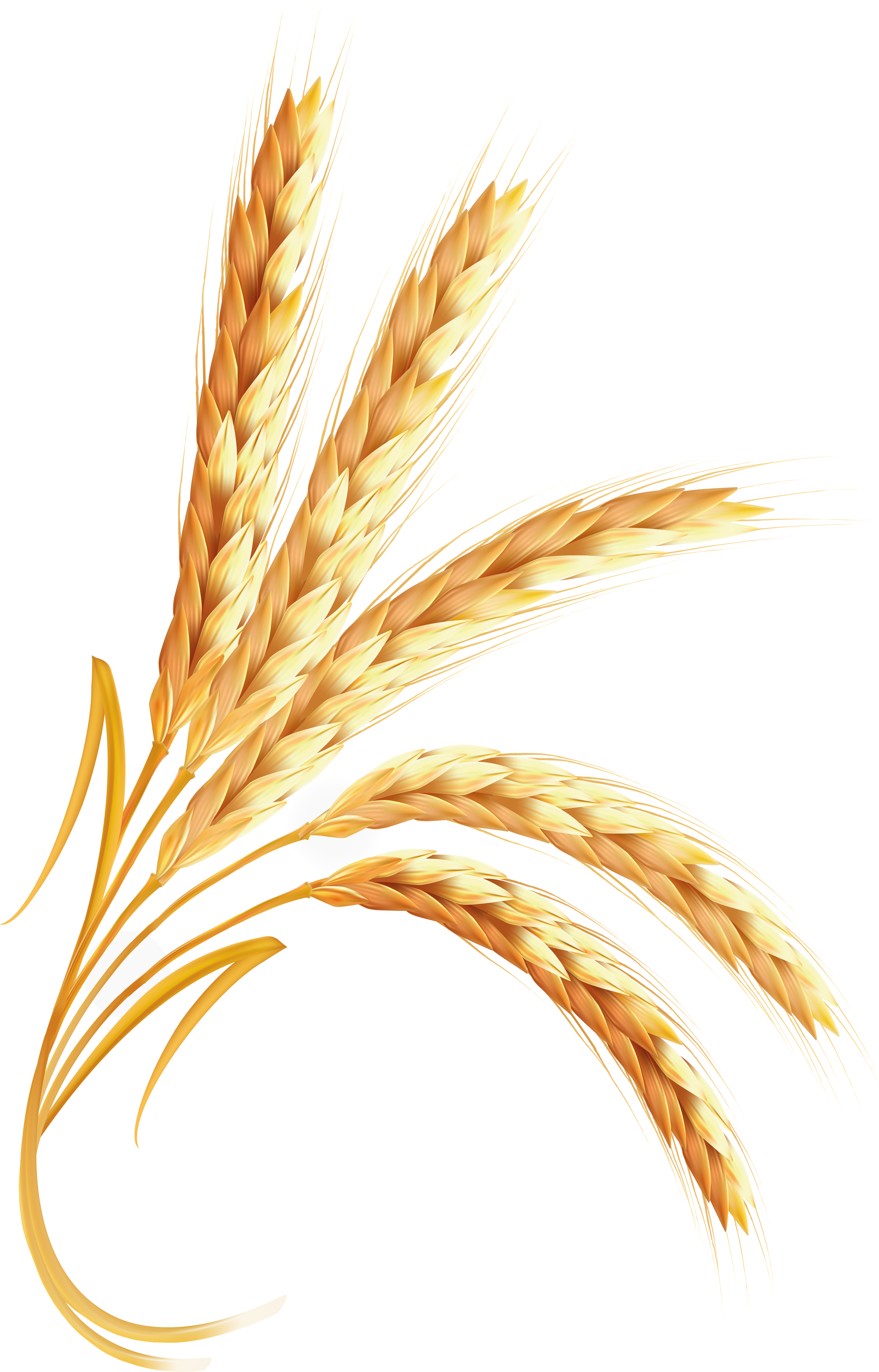 Wheat PNG images free download.