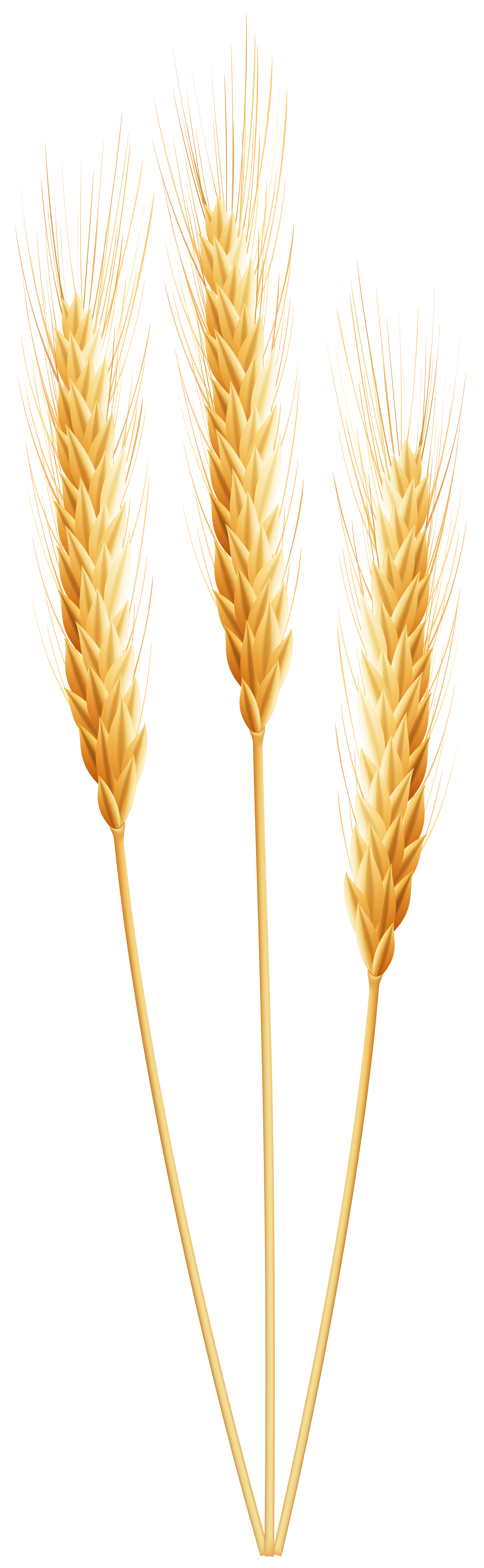 Wheat PNG Clip Art Image.