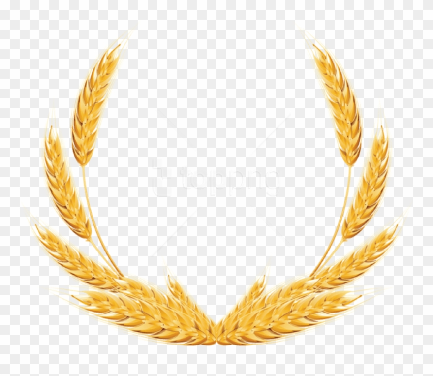 Free Png Download Wheat Png Images Background Png Images.