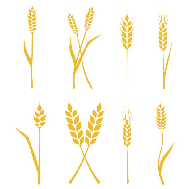 Best Sheaf Of Wheat Illustrations, Royalty.