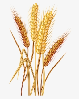 Free Grain Clip Art with No Background.