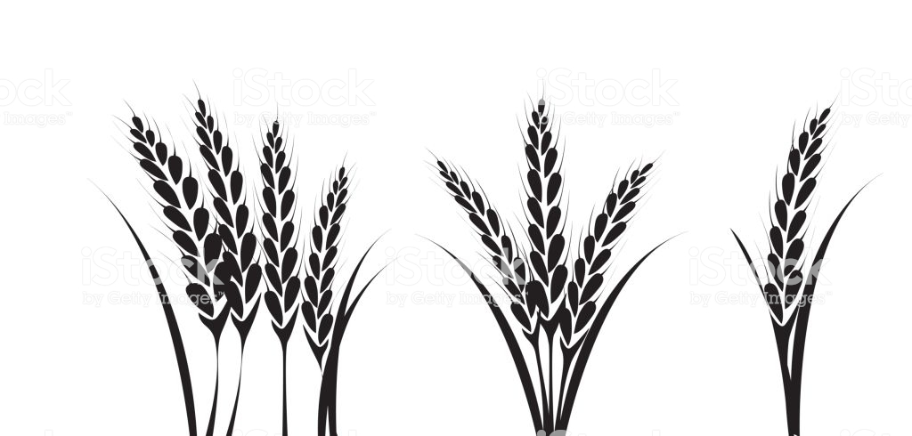 Corn Or Wheat Silhouette Drawings Stock Illustration.