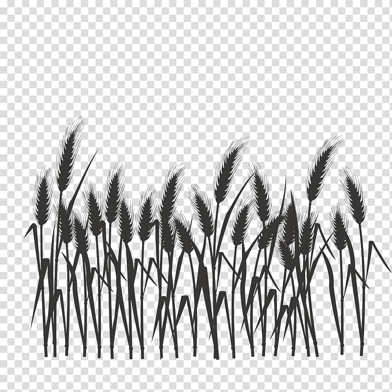 Black grass illustration, Silhouette Black and white.