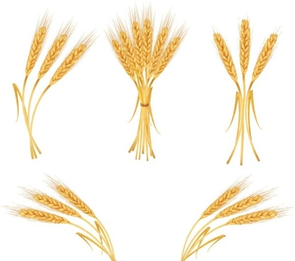 Wheat free vector download (325 Free vector) for commercial.