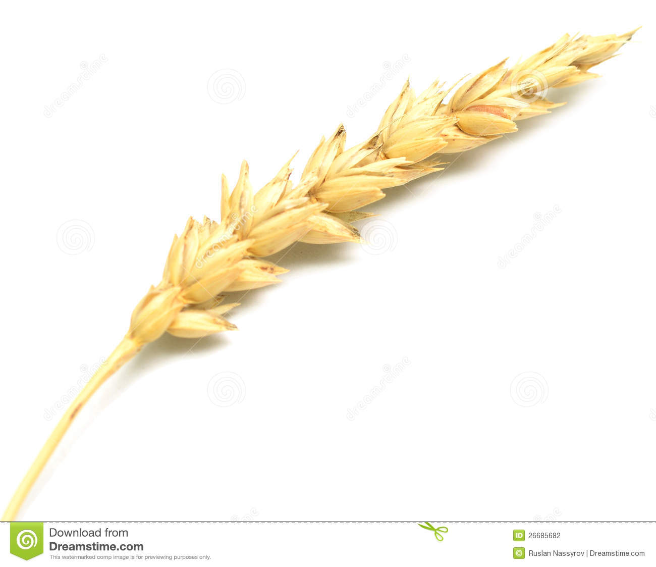 wheat spike clipart clipground
