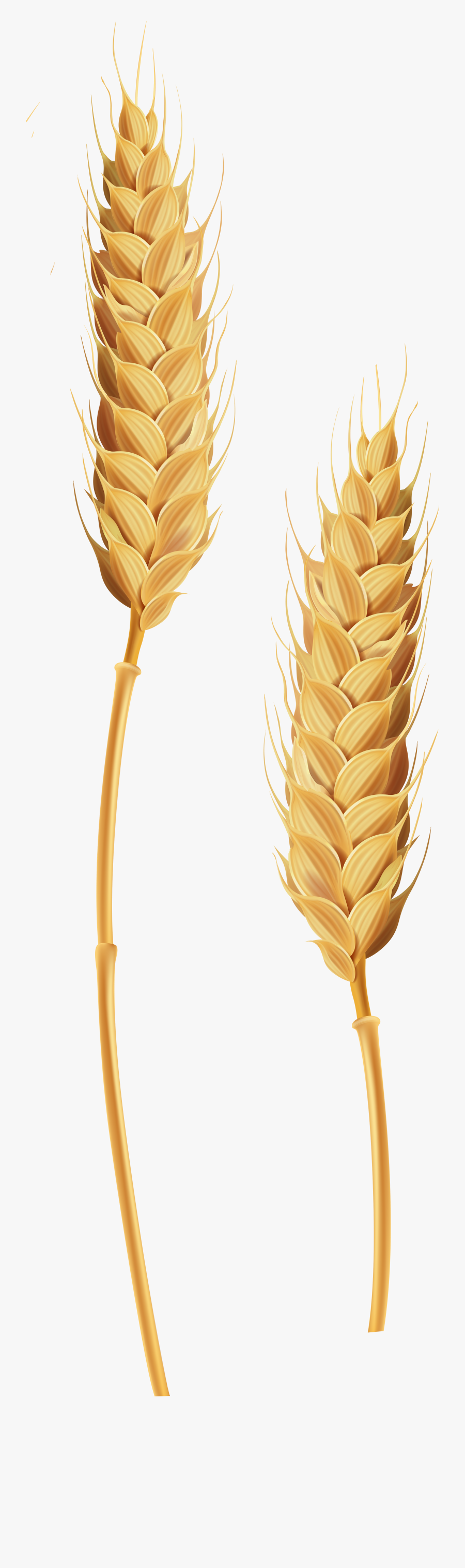 Wheat Stalk Png , Free Transparent Clipart.