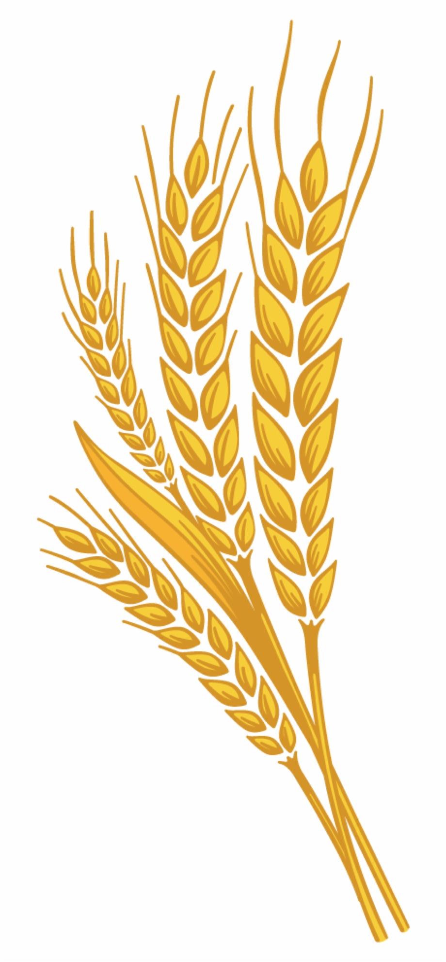 Free Wheat Stalk Png, Download Free Clip Art, Free Clip Art.