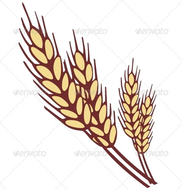 Wheat Ear #GraphicRiver Wheat ear. Simple shapes vector.