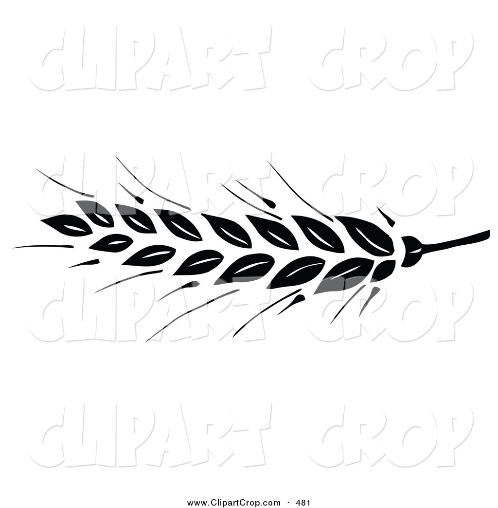 Free Wheat Vector, Download Free Clip Art, Free Clip Art on.