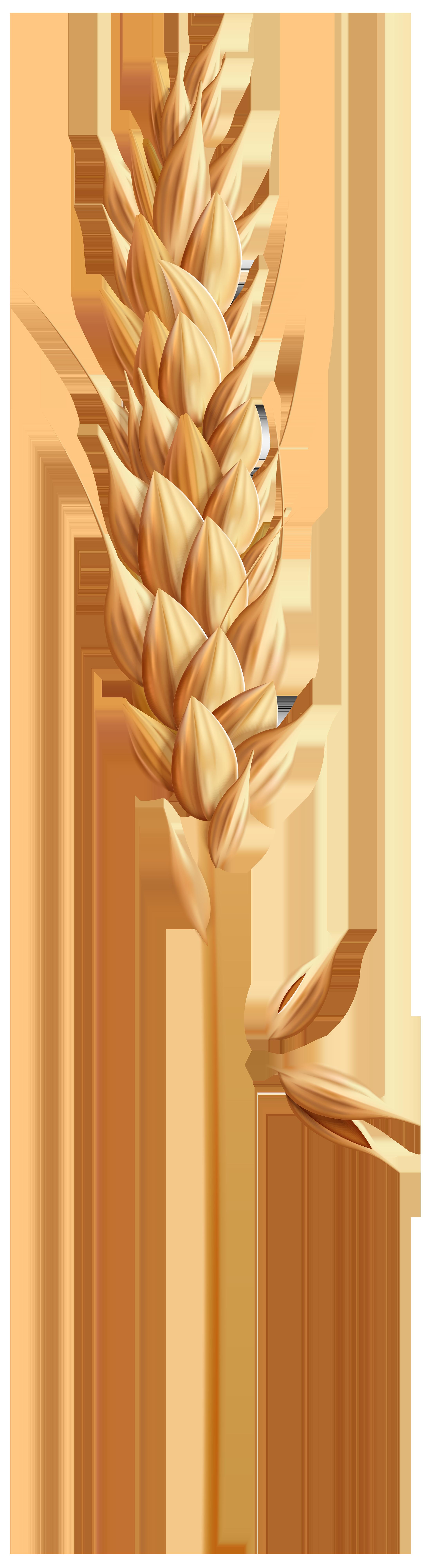 Wheat Grain PNG Clip Art Image.