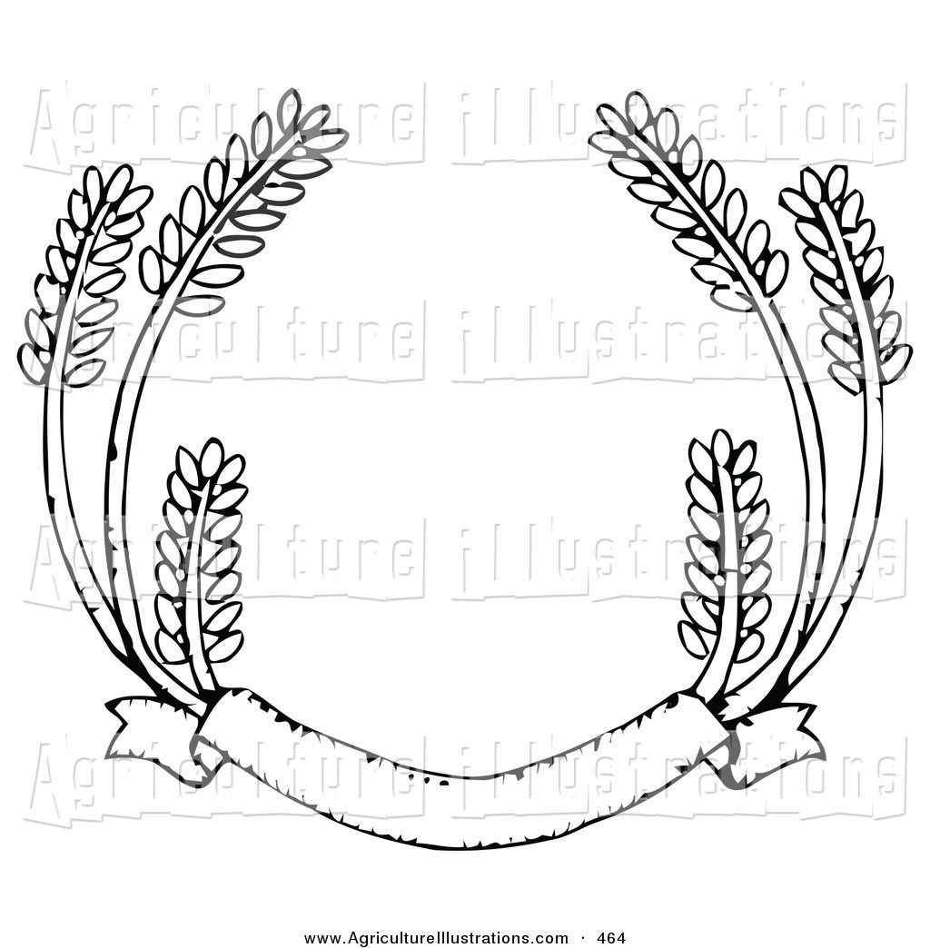 Agriculture Clipart of a Blank Banner with Strands of Wheat.
