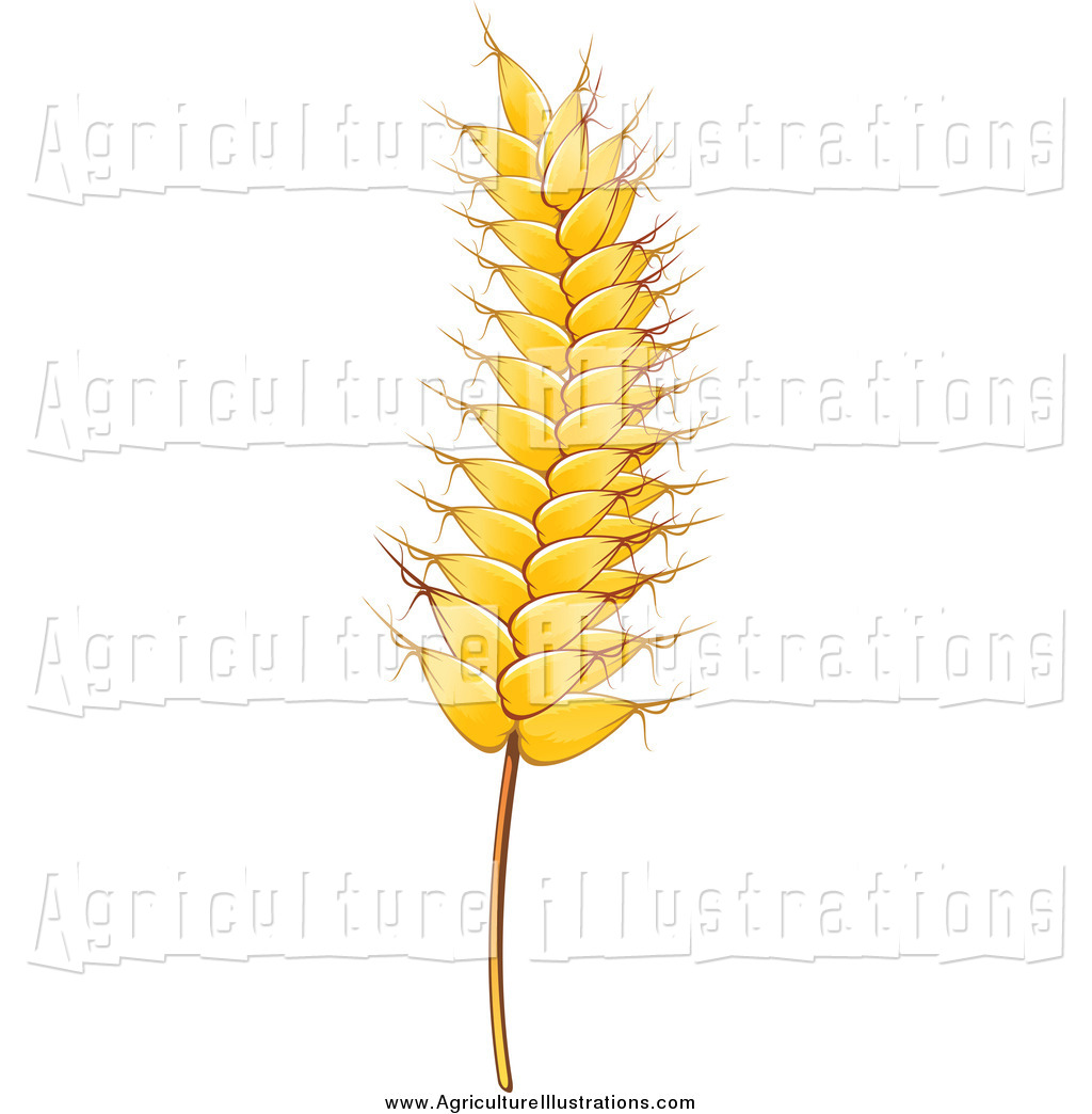 Agriculture Clipart of a Gold Strand of Wheat by Vector.