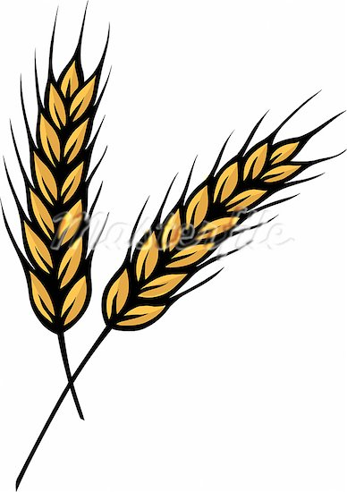 Wheat clipart strand, Wheat strand Transparent FREE for.