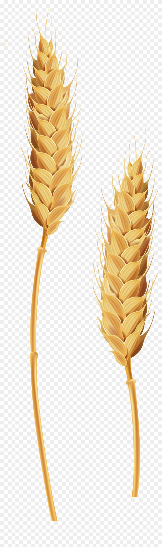 Wheat Stalks Transparent Clip Art Image.