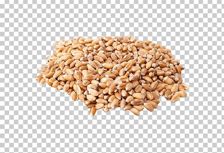 Organic Food Wheat Berry Cereal Grain Wheatgrass PNG.