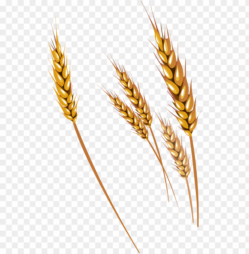 free png wheat png images transparent.