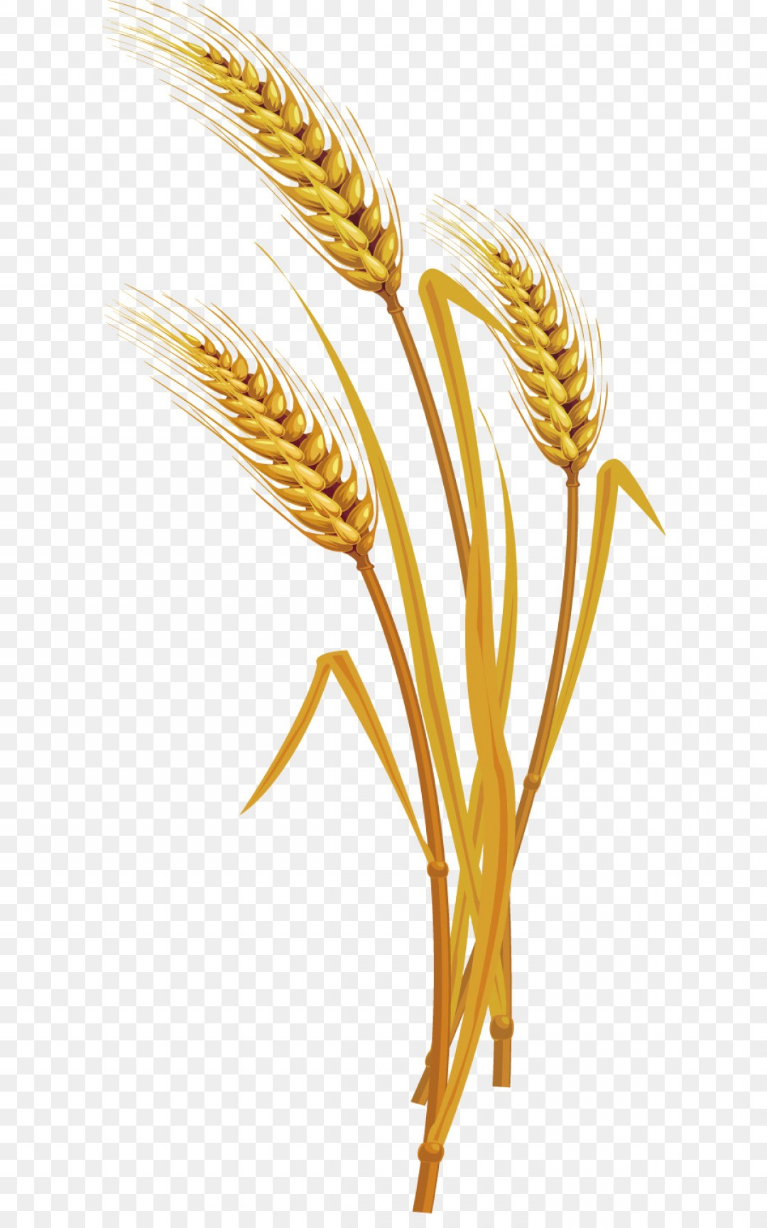 wheat vector png 10 free Cliparts | Download images on ...