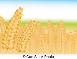 Wheatfield Clipart and Stock Illustrations. 12 Wheatfield vector.