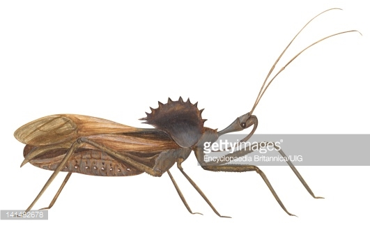 Wheel Bug Stock Illustrations And Cartoons.