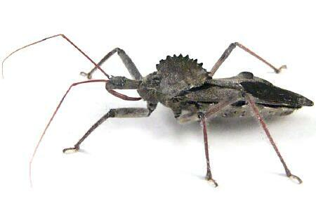 1000+ images about Creepy Critters on Pinterest.