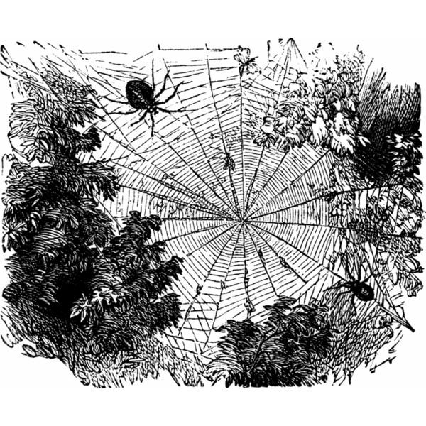 Garden Spider Clipart.
