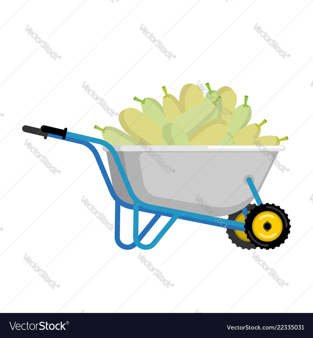 Wheelbarrow and zucchini vegetables in garden.